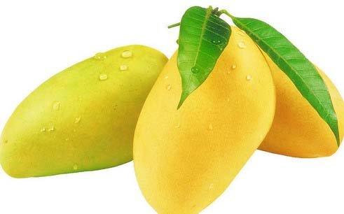 essay mango tree
