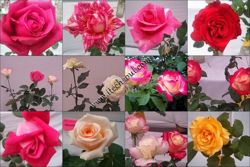 More Than One Thousand Beautiful Flower Collection (2)