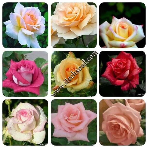 More Than One Thousand Beautiful Flower Collection