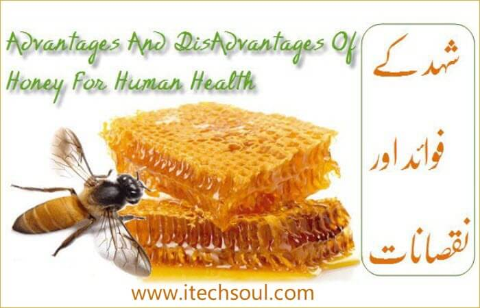 Advantages And DisAdvantages Of Honey