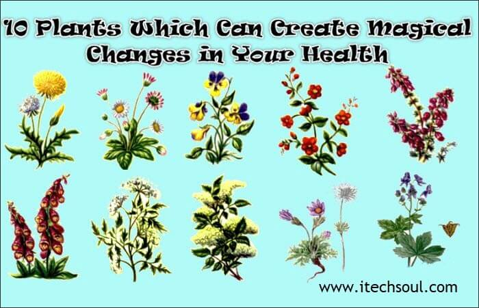 lants Which Can Create Magical Changes (1)