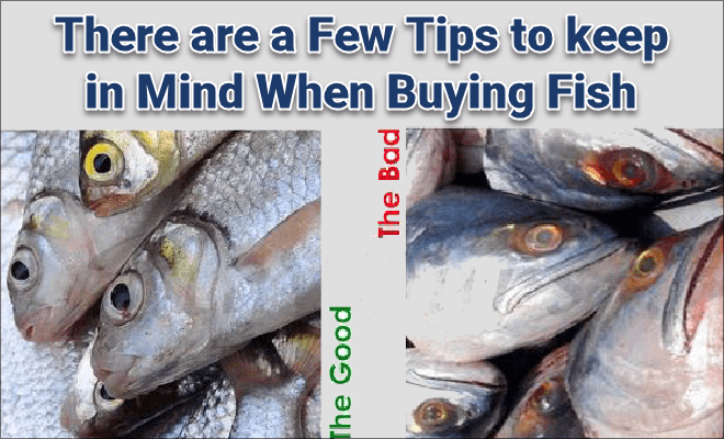 Tips to keep good fishes